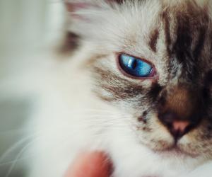 cat and gato image