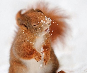 squirrel, snow, and cute image