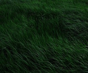 grass, green, and nature image