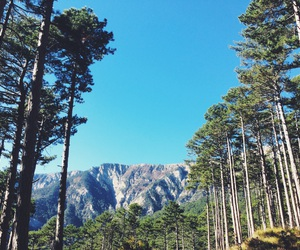 camping, crimea, and forest image