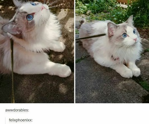 animals, cat, and funny image