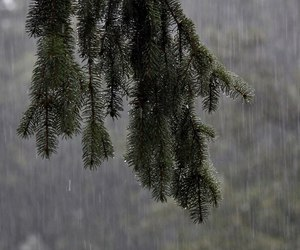rain, nature, and tree image