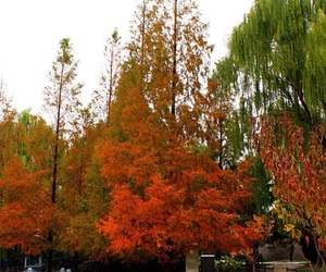 autumn, beijing, and november image