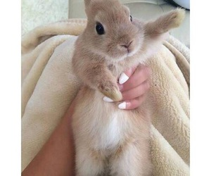 adorable, fluffy, and bunny image