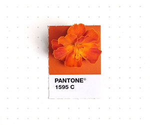 flower, pale, and pantone image
