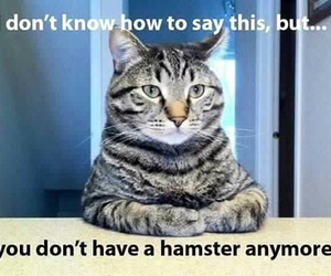 cat, funny, and hamster image