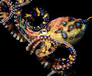 ocean and octopus image