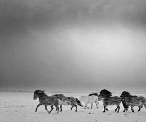 horse, iceland, and black and white image