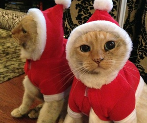 cat, christmas, and santa claus image
