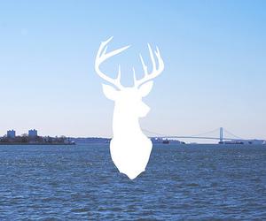 cool, deer, and illustration image