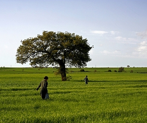 Apulia, grass, and green image