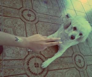dog, nails, and tattoo image