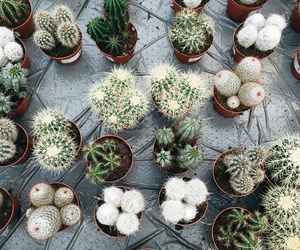 biology, cactus, and plants image