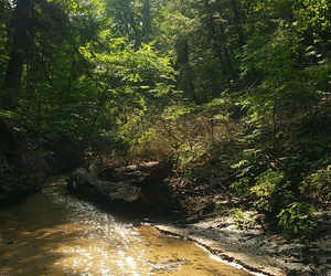 creek, forest, and michigan image