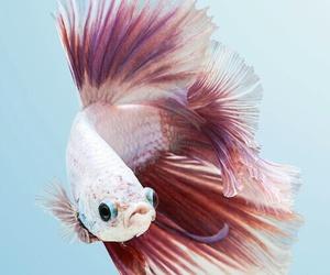 fish, animal, and sea image