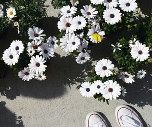 converse, summer, and flowers image