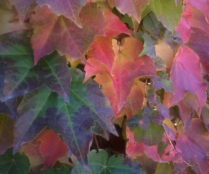 colors, fall, and leaves image