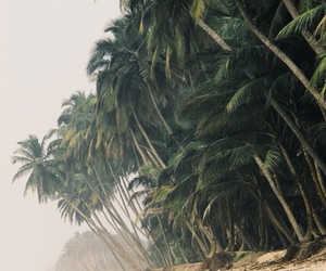 background, landscape, and tropical image