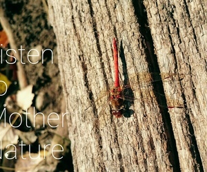 autumn, dragonfly, and life image