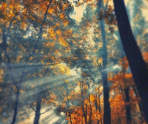 autumn, trees, and autunno image