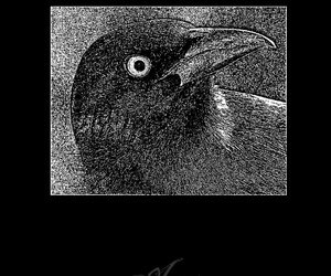 aves, post-rock, and Black Metal image