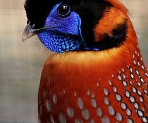 birds, colorful, and feathers image