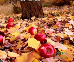 apple, autumn, and cold image