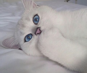 cat, blue, and white image