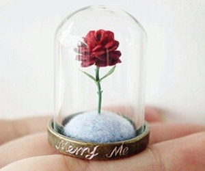 rose, love, and flower image