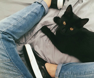 cat, black, and jeans image