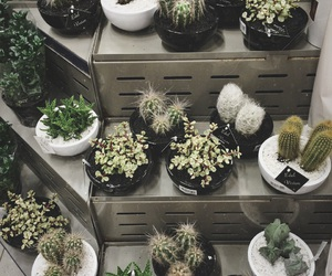 cactus, green, and inspo image