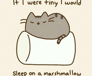 cat, marshmallow, and cute image