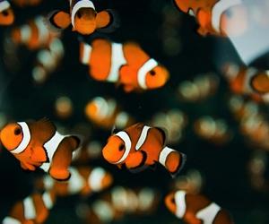 fish, nemo, and orange image