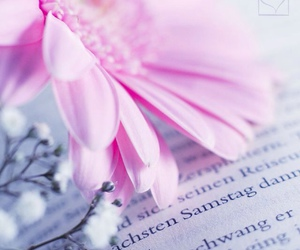 books, daisy, and spring image