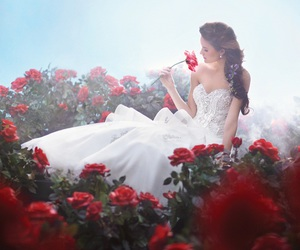 dress, rose, and wedding image