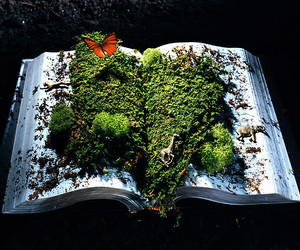 moss, nature, and dirty book image