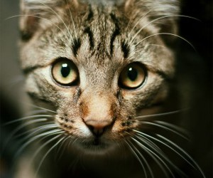 animal, photography, and cat image