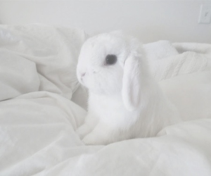 white, cute, and bunny image