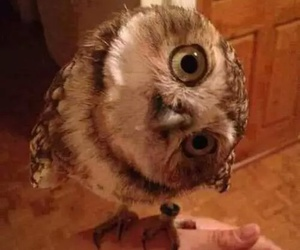 buho, love eyes, and owl beauty baby nature image
