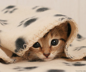 animal, blanket, and pretty image