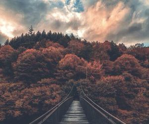 nature, forest, and sky image