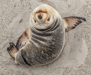 animal, seal, and beach image