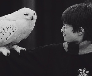 harry potter, hedwig, and hogwarts image