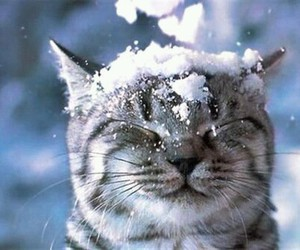 cute cat, snow, and winter image