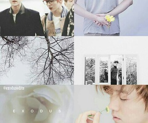 exo, flowers, and han image