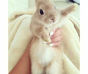 animal, fofo, and rabbit image