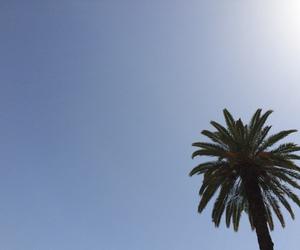 palm, sun, and tree image
