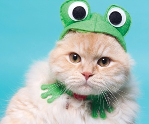cat and frog image