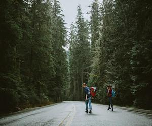 adventures, forest, and free image
