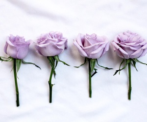 rose, flowers, and lilac image